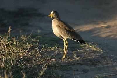 Kenya Birds  (15 Species)