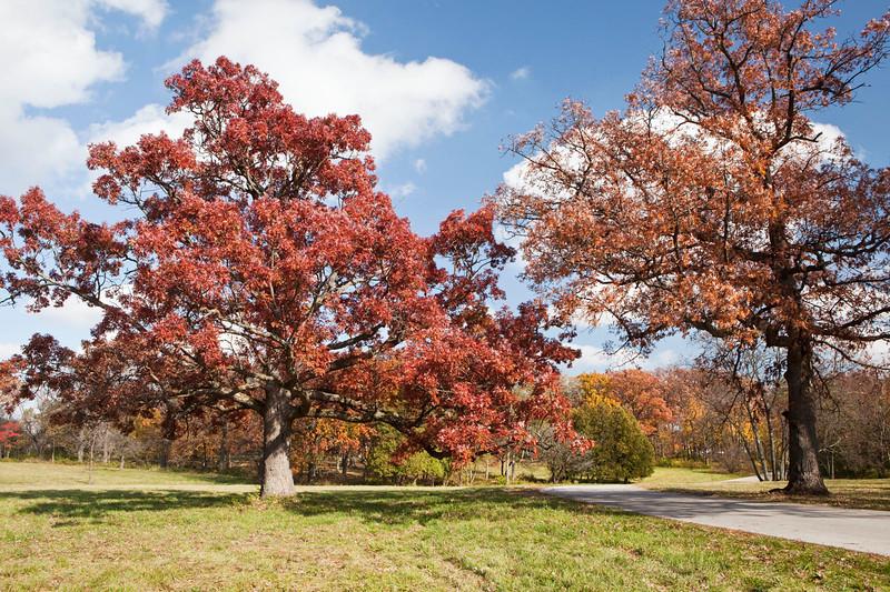 Magnificent Oaks 2, Illinois