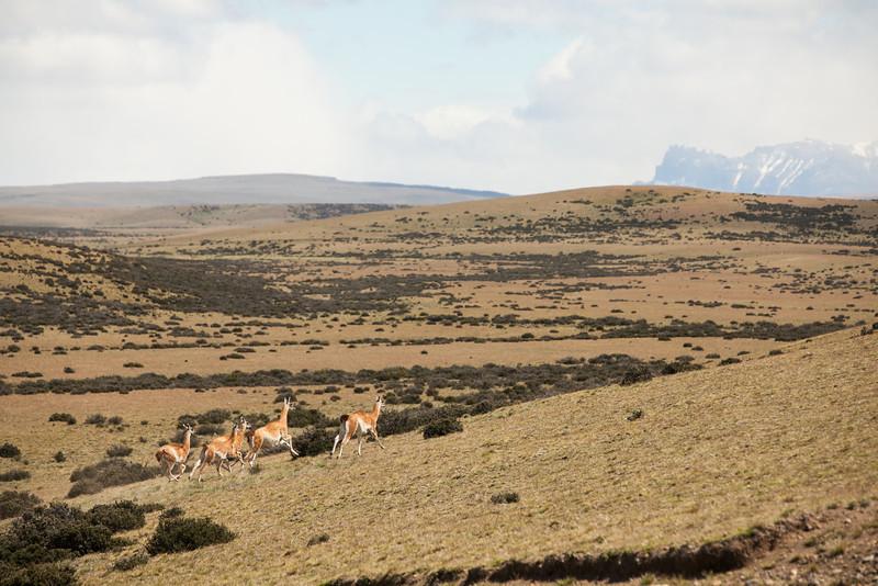 patagonia-1066.jpg