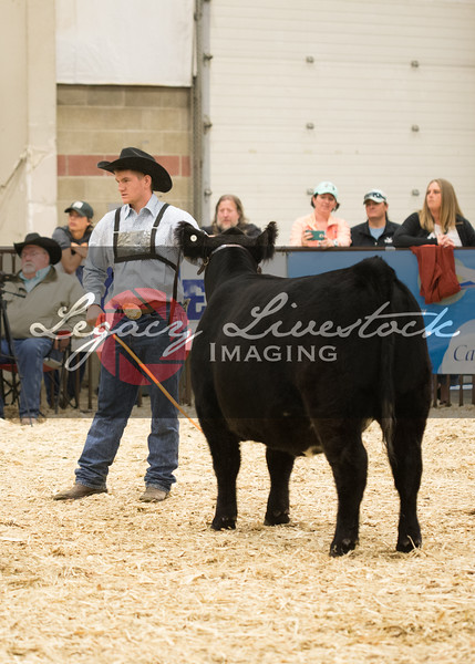 Club Calf Show and Futurity