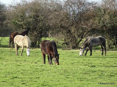 Horses, Marchwood