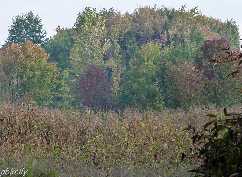 10-05.  Fall color starting in the morning haze.  Cornfield obscures my view this year.