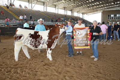Steer Show Ring A