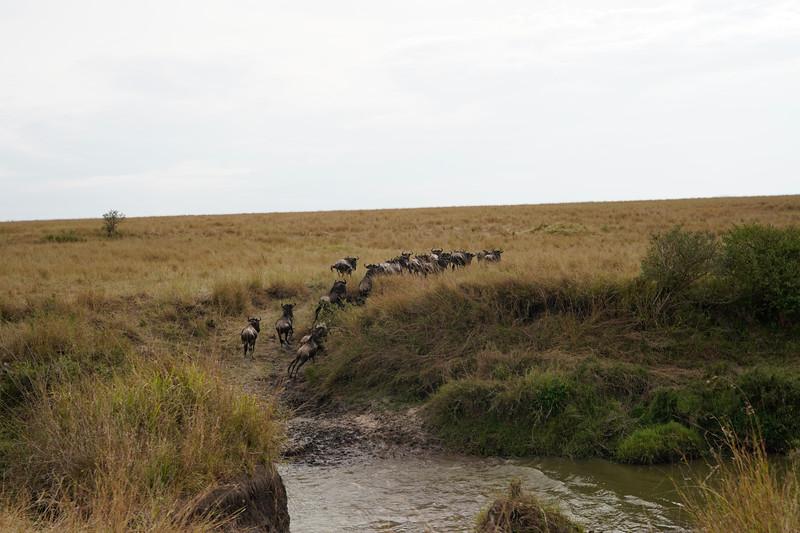 safari-2018-91.jpg