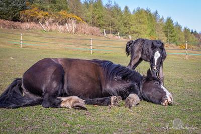 Steph's Foal