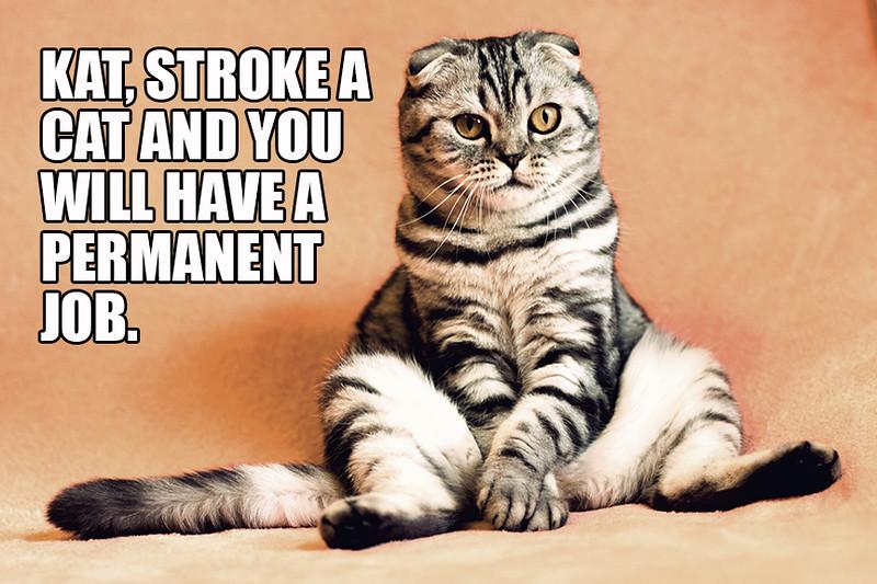 Stroke A Cat.jpg