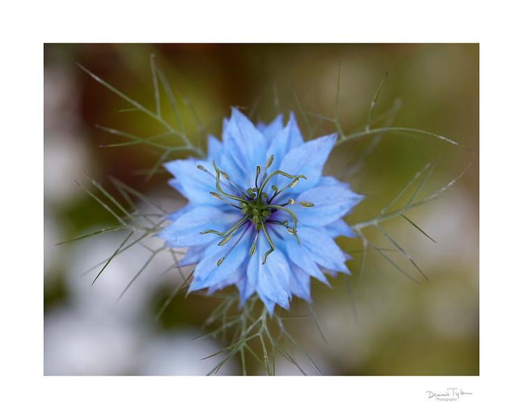Flower_O9A6541.jpg