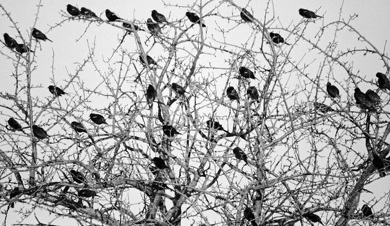 Birds - North of Toronto, Ontario, Canada - 1987