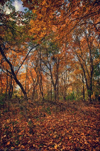 Trailside Park-7323_HDR.jpg