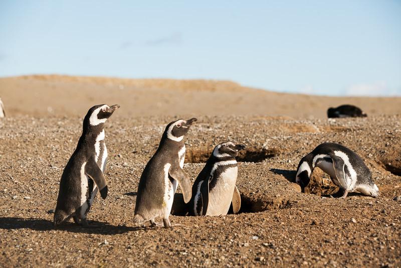 patagonia-1015.jpg