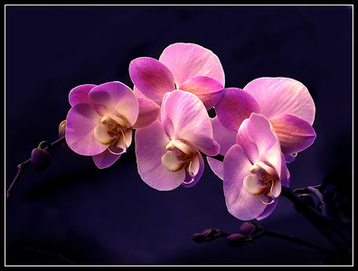 Orchids & other tropical flowers