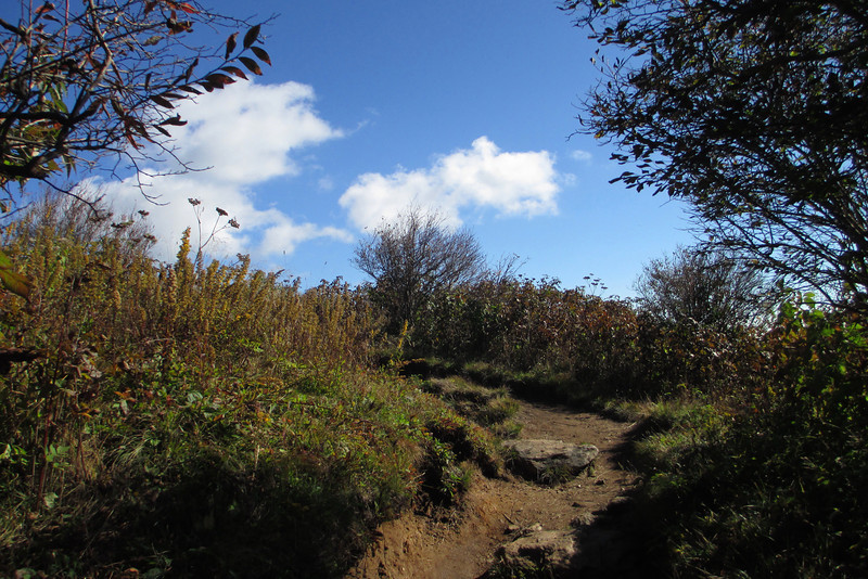Art Loeb Trail -- 5,980'