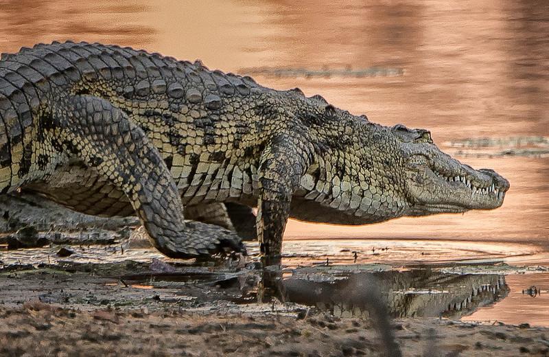 2014-08Aug-Okavango Masters-91-Edit.jpg