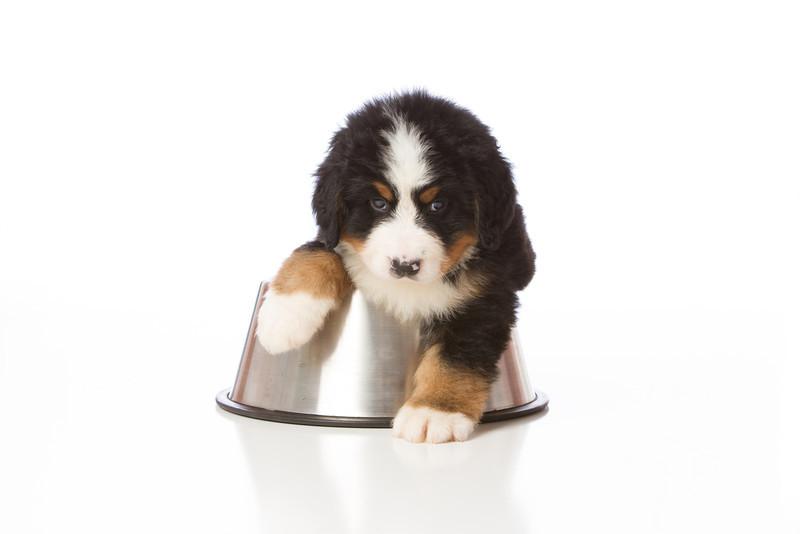 2013-Pearson Pups-Jun02-0368.jpg