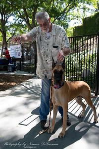 180908 Pawllywood Dog Contest