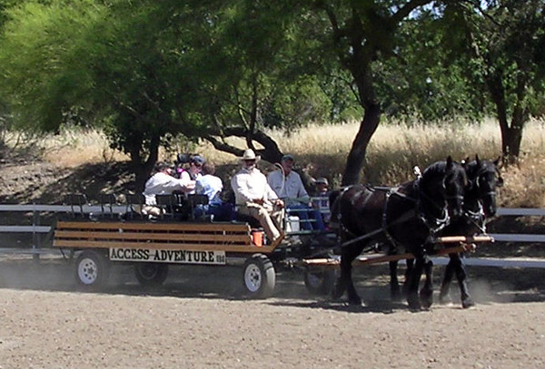 Heather Farms Horse Faire