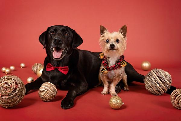 Baxter & Jake