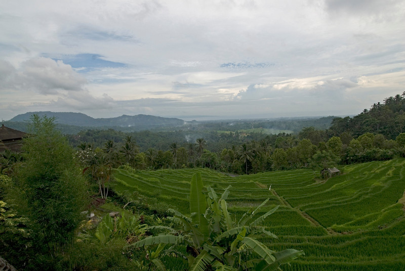 Coastal view of Bali from the Tegalalang Rice Terrace