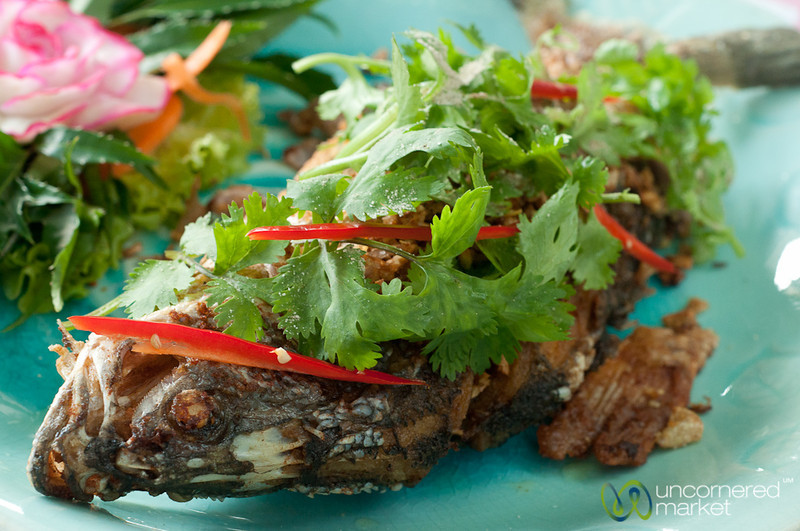 White Snapper with Fried Garlic and Fresh Cilantro - Koh Samui, Thailand