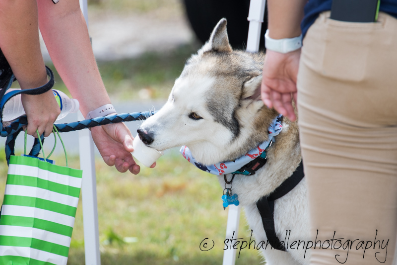Woofstock_carrollwood_tampa_2018_stephaniellen_photography_MG_8563.jpg