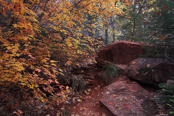 Zion_North_Creek_Fall_Foliage_3105.jpg