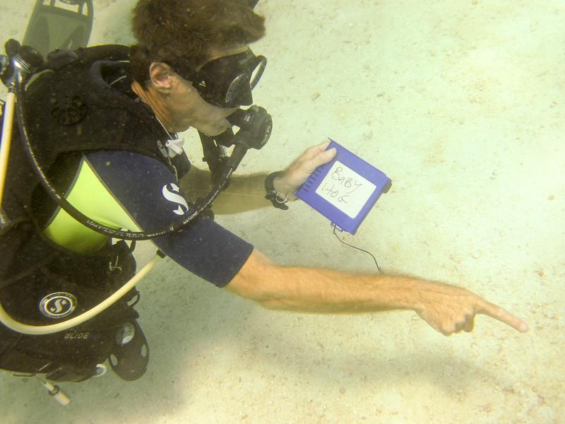 islamorada-diving-6.jpg