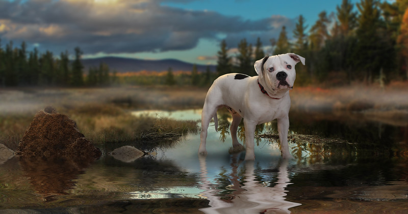 dog-lake-2.jpg