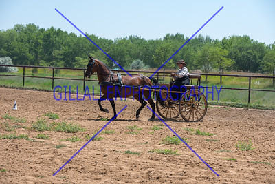 CoPtHA 160807 Carriage Driving