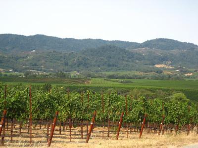 Napa / Sonoma County