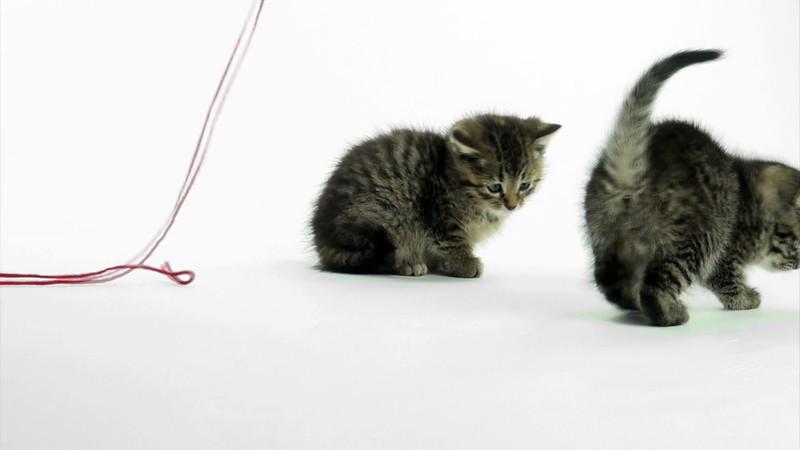 Kittens_tabby_022.mov