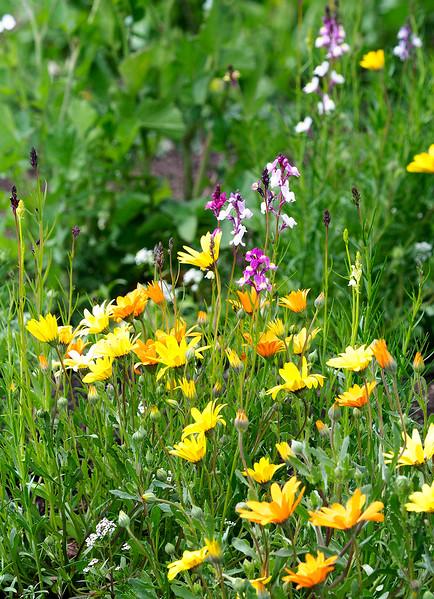 laguna wildflowers.jpg