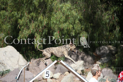 Contact Point AKC Agility Trial - Sunday, 6/15/14