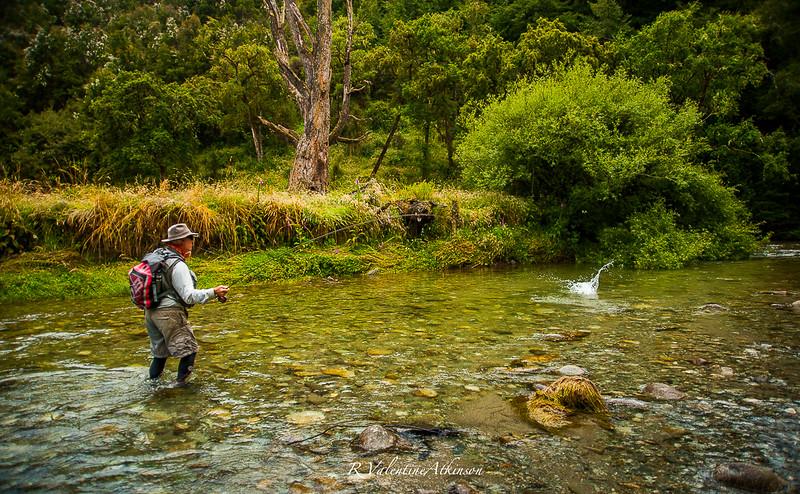 NZ 2016 best-27.jpg