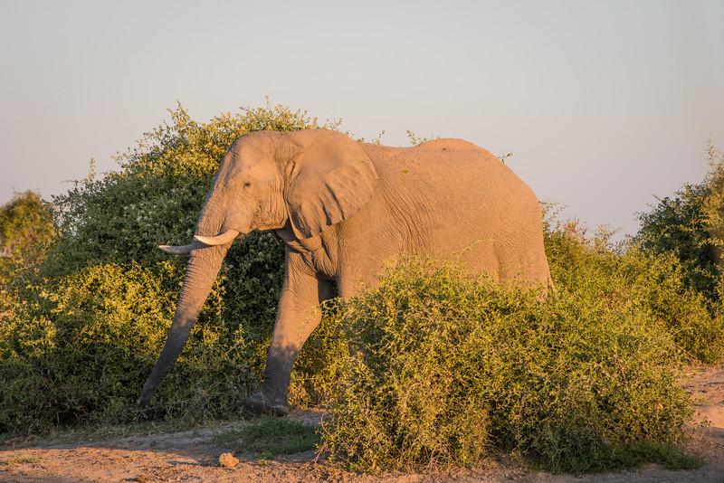 Botswana_June_2017 (4143 of 6179).jpg