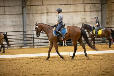 Horse 167