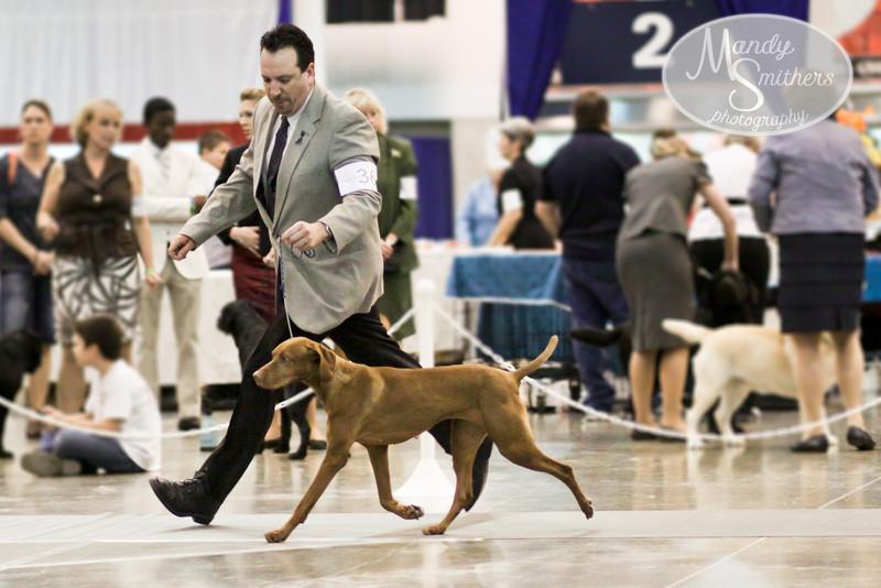2011-07-24   IMG_0115  Houston Dog Show SUNDAY_.jpg