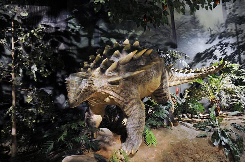 04-2 Prehistoric Animal .jpg