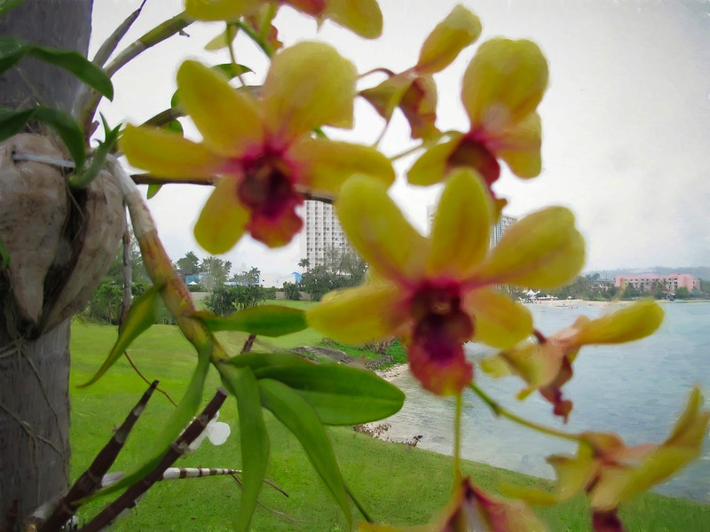 Yellow red Orchid