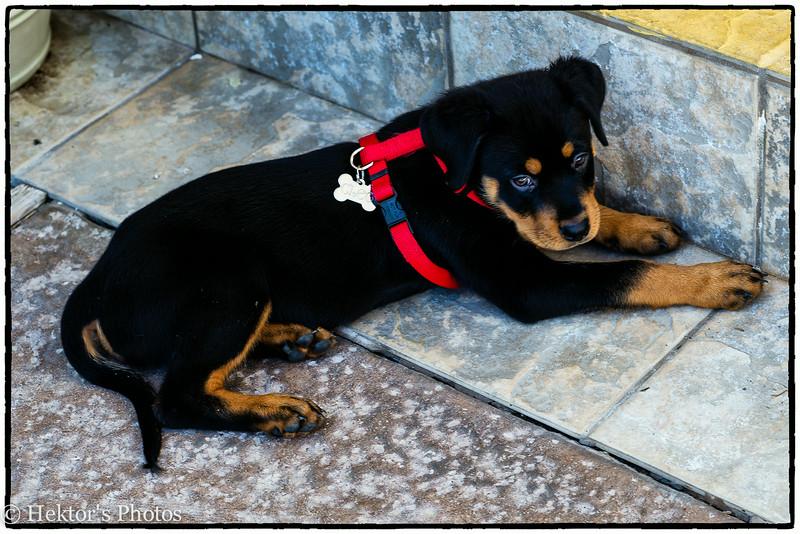 Bella-Cleo-Zoe-16.jpg