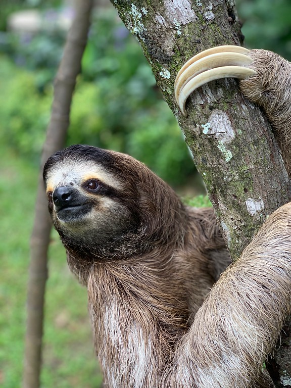 Waiting for my real life to begin. I'm linking up with Finish The Sentence Friday for a great prompt. This week's topic is: I hope my life is described as.. sloth photo