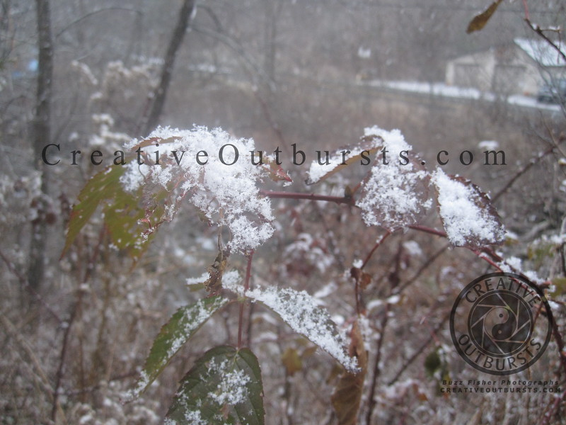 2012 11-24 Snow