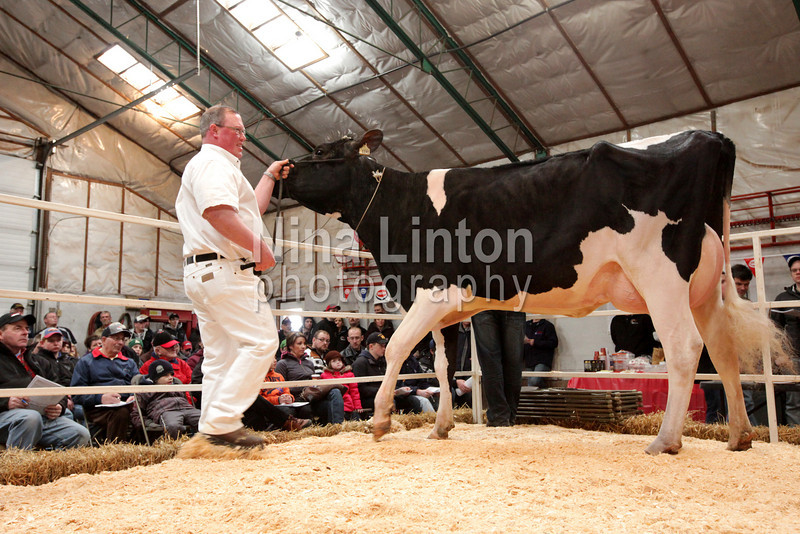 Opportunity East Holstein Sale March 19th, 2011