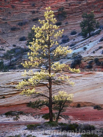 back-lit-tree.jpg