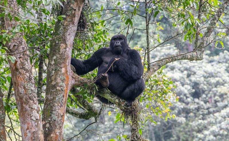 Uganda_T_Gor-1554.jpg