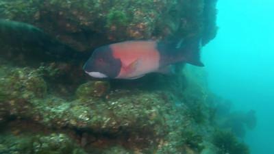 Avalon Underwater Park (video) (6-30-12)