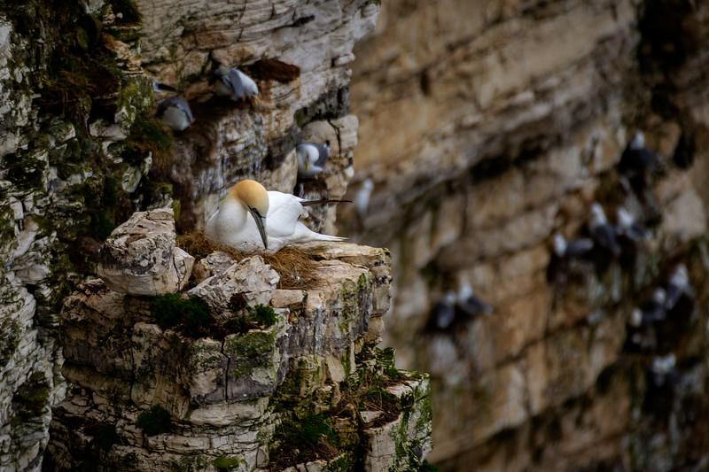 Prime Nesting Spot