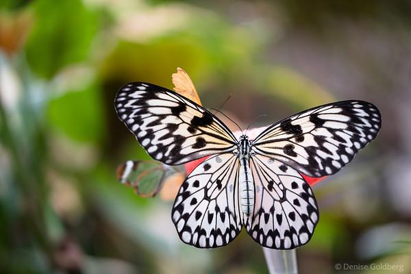 flitter, flutter, butterfly! 2018