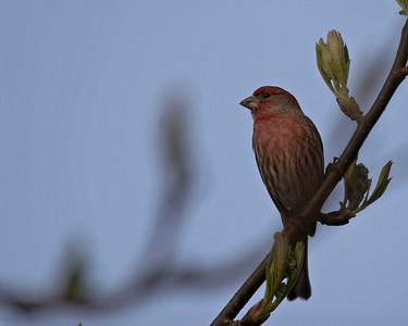 Birds - Unknown