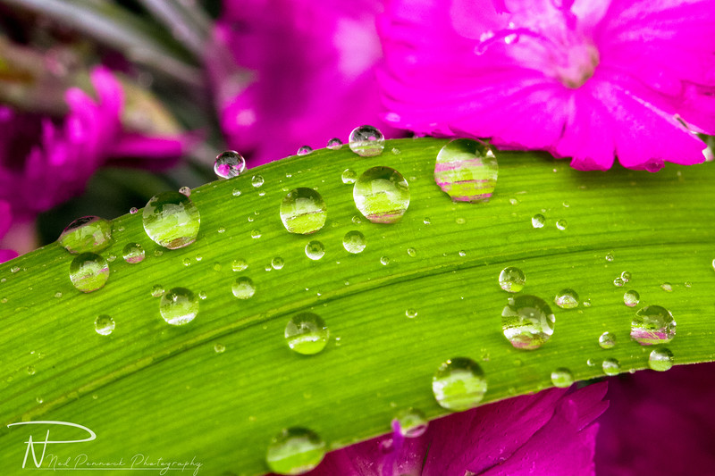 Water Drops in Garden-1.jpg
