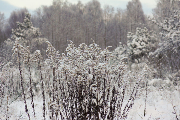 Färgaryd-Nissaryd-Åker vinter
